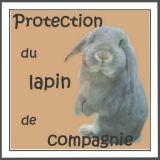 Protection Du Lapin De Compagnie