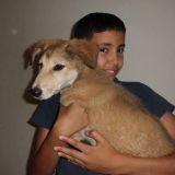 Rex Dog