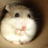 Venus Le Hamster