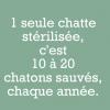Chatty31