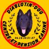 Diablotin-Dog