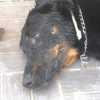 Dogesco