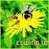 Elwing10
