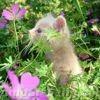 Marmotte45