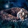 Tigresse26