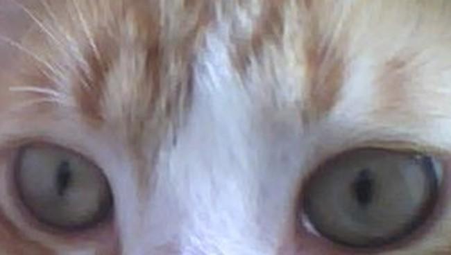 miri chat The latest tweets from miri🍡🐅 (@mirikun) miri's furry art account 💪🐶 ケモノお絵かき垢です!sometimes r18 main/本垢 ️ @mirihtmr ⬅️あんスタ/忍たま/chat おもらしfetish垢 ️ @oshigamakun business: hatomuramiri@gmailcom 日本 東京.