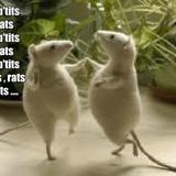 3 p'tits rats , 3 p'tits rats....