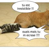 chats ecrasant