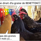 la vie en couleur vue par les poules