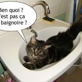 Lavabain