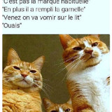 Mécontents les chats
