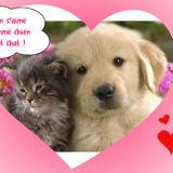 on s'aime comme chien et chat