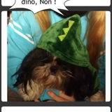 Où un Dino