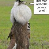 si votre ramage ressemble à votre plumage...
