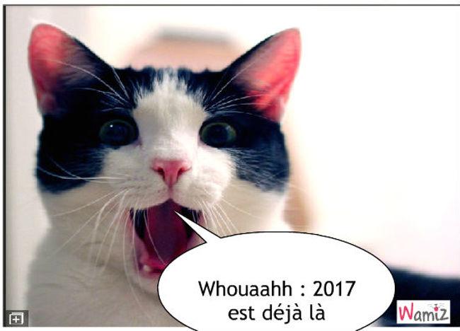 2017, lolcats réalisé sur Wamiz
