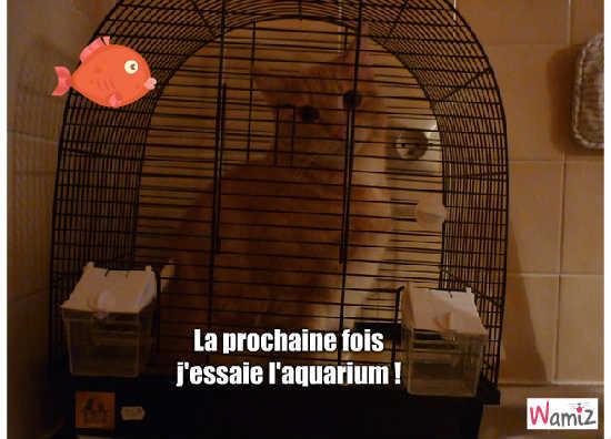 chaton dans la cage !, lolcats réalisé sur Wamiz