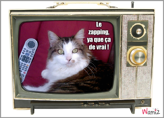TV addict, lolcats réalisé sur Wamiz