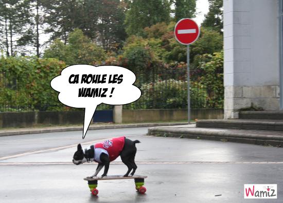 chien skateur, lolcats réalisé sur Wamiz