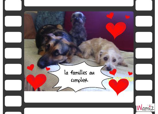 les 3 chiens, lolcats réalisé sur Wamiz
