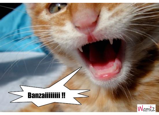 Banzaiiiiiiiiiiiii !, lolcats réalisé sur Wamiz