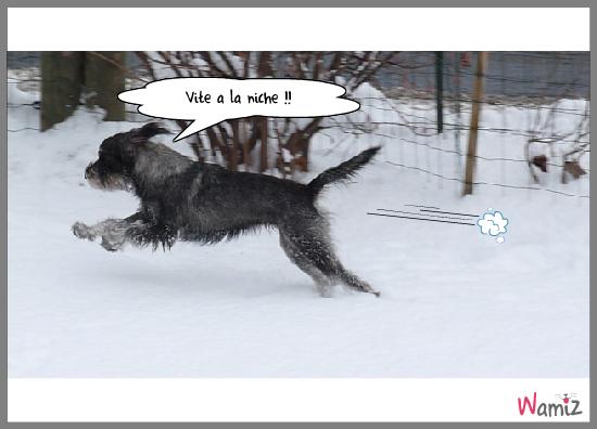 La Schnau des neiges., lolcats réalisé sur Wamiz