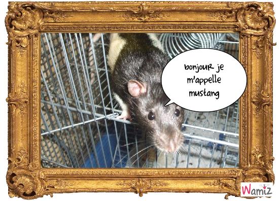 mon rat mustang, lolcats réalisé sur Wamiz