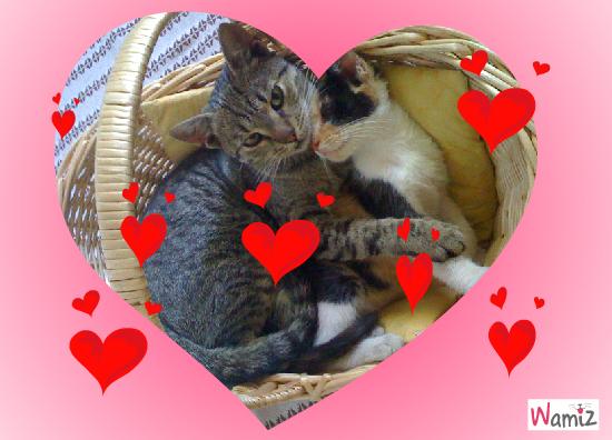 St Valentin, lolcats réalisé sur Wamiz
