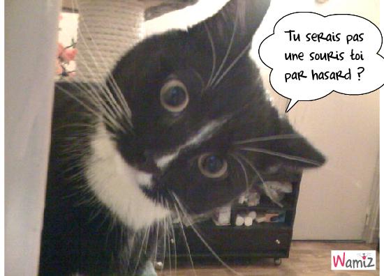 chat cherche souris !, lolcats réalisé sur Wamiz