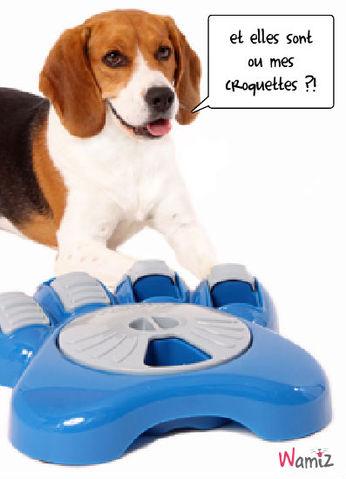 gadget pour chien, lolcats réalisé sur Wamiz