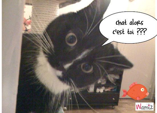 chat alors, lolcats réalisé sur Wamiz