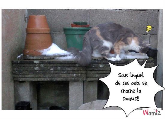 le jeu du chat et de la souris, lolcats réalisé sur Wamiz