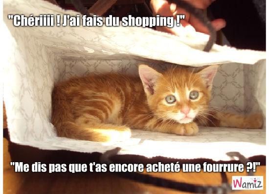 Shopping !, lolcats réalisé sur Wamiz