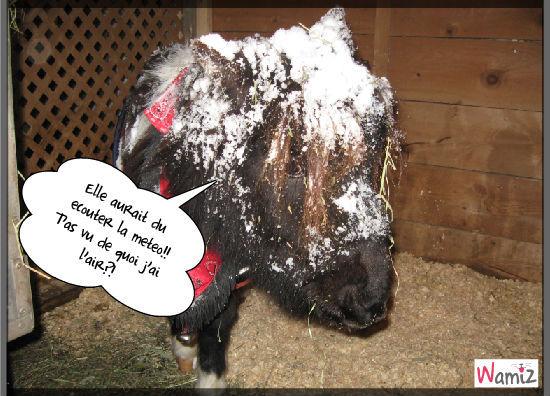 Tempête de neige?, lolcats réalisé sur Wamiz