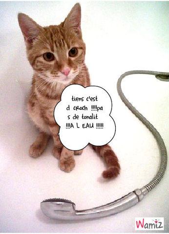 chat de baignoire, lolcats réalisé sur Wamiz