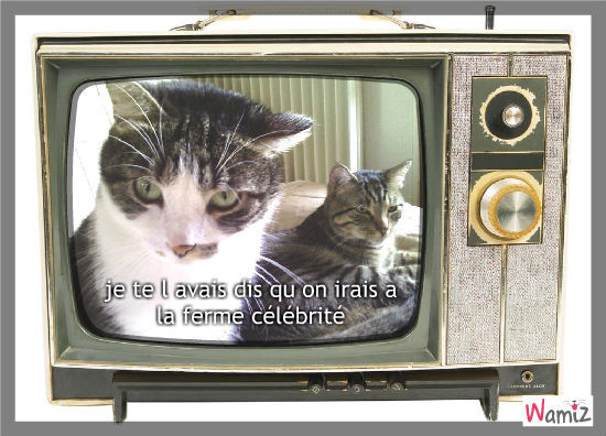 je suis un TITI le vrai chat, lolcats réalisé sur Wamiz