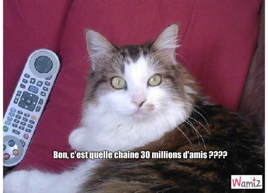 chat tv, lolcats réalisé sur Wamiz