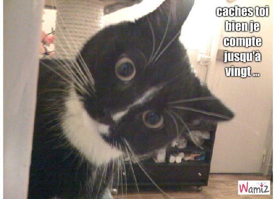 chat joueur, lolcats réalisé sur Wamiz
