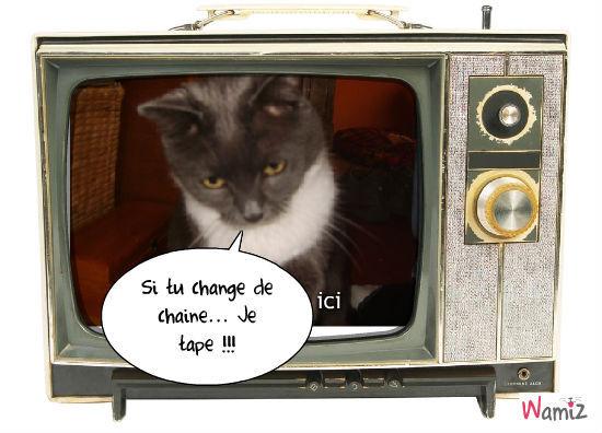 Ma télé, lolcats réalisé sur Wamiz