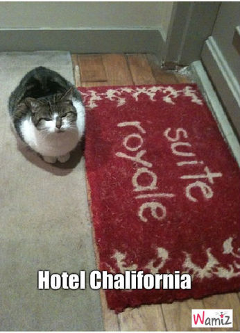 Hotel California, lolcats réalisé sur Wamiz