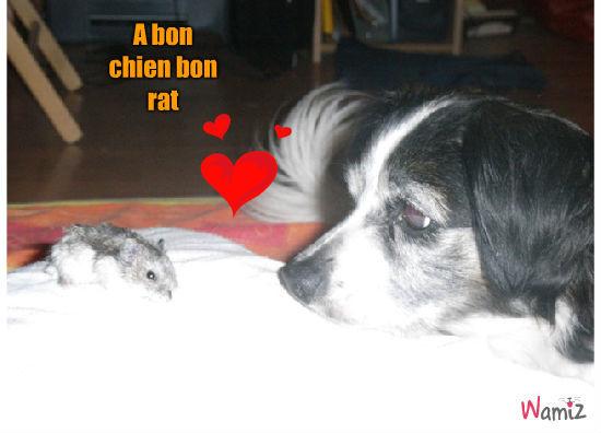 A bon chien bon rat, lolcats réalisé sur Wamiz