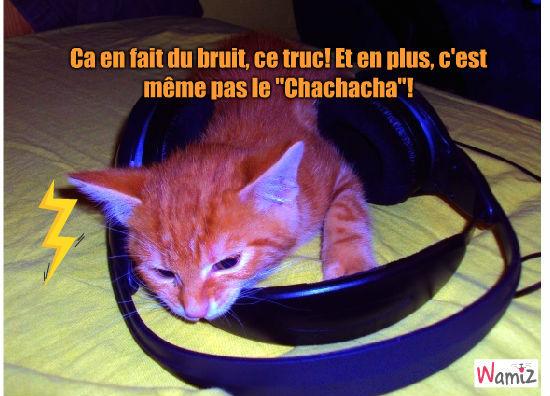 Je voudrai bien le Chachacha..., lolcats réalisé sur Wamiz