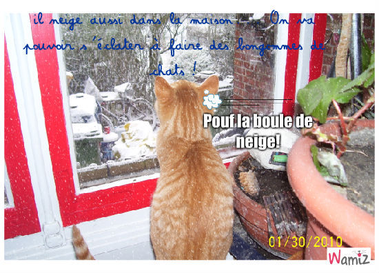 Il neige dans la maison, mais c'est incroyable!, lolcats réalisé sur Wamiz