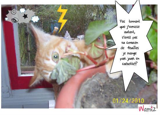 La nouvelle de l'année: Chat Herbivore!!!, lolcats réalisé sur Wamiz