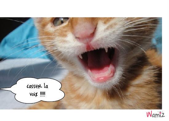chat chanteur, lolcats réalisé sur Wamiz