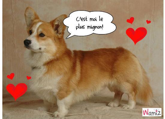 Le chien de mes rêves, lolcats réalisé sur Wamiz