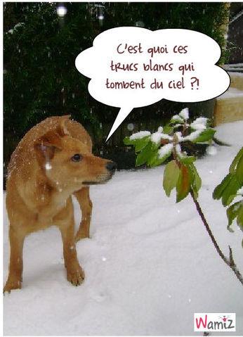 Première neige, lolcats réalisé sur Wamiz