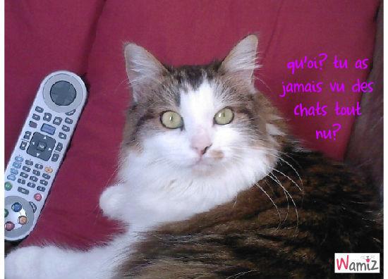 chatte cherche chat, lolcats réalisé sur Wamiz