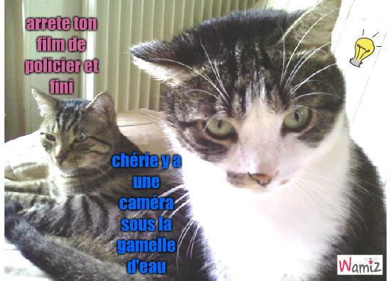 les chats, lolcats réalisé sur Wamiz