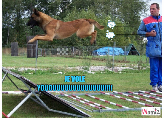 le chien volant, lolcats réalisé sur Wamiz