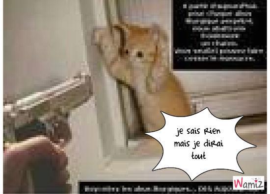 chat peur, lolcats réalisé sur Wamiz